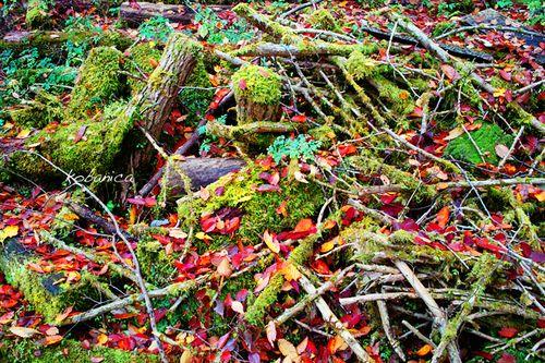 091108_kobanica_forest02