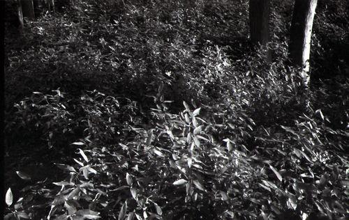 Leica_Summaron35_kobanica20150223_2